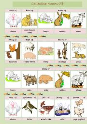 English Worksheets: Collective Nouns (animals) 5