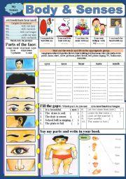 English Worksheets: Body & Senses