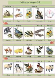 English Worksheets: Collective Nouns (animals) 6