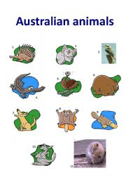 English Worksheets: Australian Animals II
