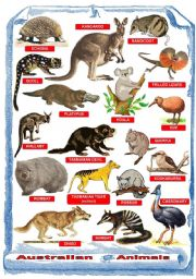 English Worksheet: Australian animals - Poster