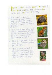 English Worksheets: Do you know much about animals? Lets� check!