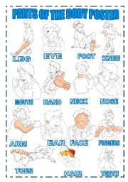 English Worksheets: PARTS OF THE BODY POSTER