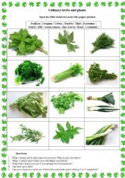English Worksheet: Culinary herbs and plants