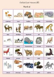 English Worksheets: Collective Nouns (animals) 8
