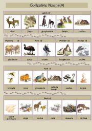 English Worksheet: Collective Nouns (animals) 9