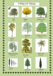 The Gallery For Pictures Of Different Types Of Trees
