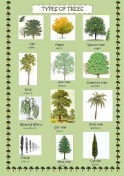 English Tree Names - Garden Design Ideas