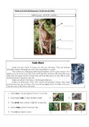 English Worksheets: Koala Bears