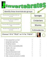 image relating to Invertebrates Worksheets Free Printable identify Invertebrates worksheets