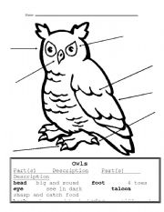 English Worksheets: Owl parts