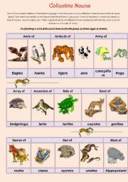 English Worksheets: Collective Nouns (animals) 1