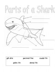 Home > animals worksheets > Parts of a Shark