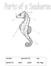 english worksheets parts of a seahorse. Black Bedroom Furniture Sets. Home Design Ideas