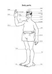 English Worksheets: English Body Part