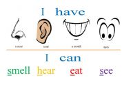 English Worksheets: I have a nose
