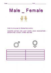 English Worksheets: Male - Female