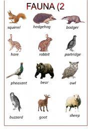 English Worksheets: alpine fauna (2)