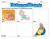 English Worksheet: The human cycle of life