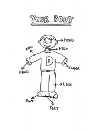English Worksheets: Your body