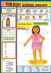 English Worksheets: Our Body & Sense  Organs