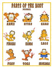 English Worksheets: PARTS OF THE BOBY- 2/2