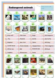 English Worksheets: endangered animals: matching