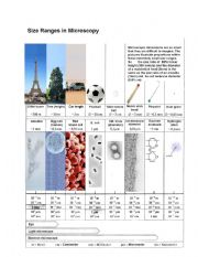 English Worksheets: Size ranges in microscopy