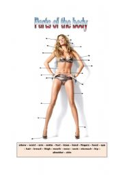 Body parts with top Gisele Bundchen
