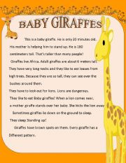 English Worksheets: BABY GIRAFFES