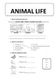 English Worksheets: Animal life