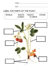 English Worksheet: PARTS OF A PLANT