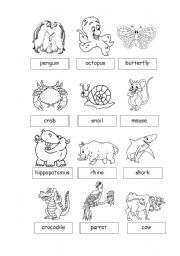 English Worksheets: Animals3
