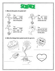 from seed to plant book esl worksheet by sgsilvey. Black Bedroom Furniture Sets. Home Design Ideas