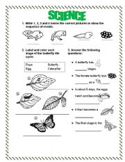 English Worksheet: LIFE CYCLE (FROG-BUTTERFLY)