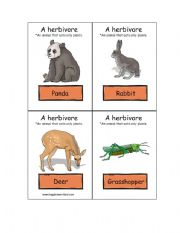 English Worksheets: Herbivore