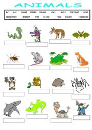Food chain printables for 1st grade