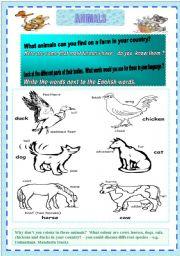 English Worksheets: **animals**