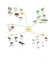 English Worksheets: types of animals
