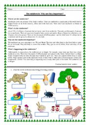 Rainforests - reading + vocabulary
