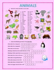 English Worksheets: ANIMALS ACTIVITIES