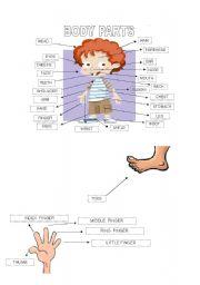 English Worksheets: Body parts pictionary