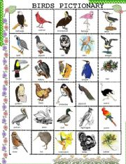 English Worksheets: BIRDS PICTIONARY