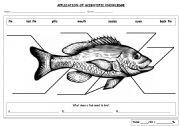 English Worksheets: Fish Parts Labeling