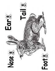 Little Peter Rabbit Body Part´s Diagram