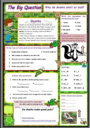 English Worksheets: Why do skunks smell so bad?  A science question. 10