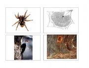 English worksheet: Animal homes (part 4 of 4)