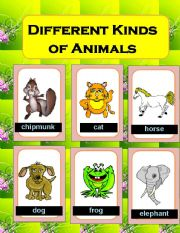 English Worksheets: Different kinds of Animals