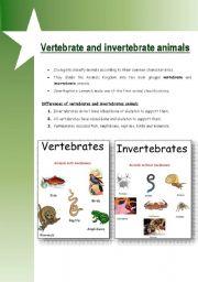 English Worksheet: Vertebrate & invertebrate animals