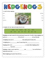 English Worksheets: Hedghogs